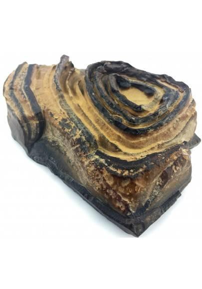STROMATOLITE GIANT del Pakistan Brown Crystal Healing Specimen Chakra-1