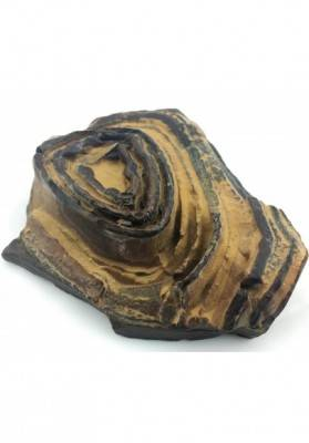 STROMATOLITE GIANT del Pakistan Brown Crystal Healing Specimen Chakra-3