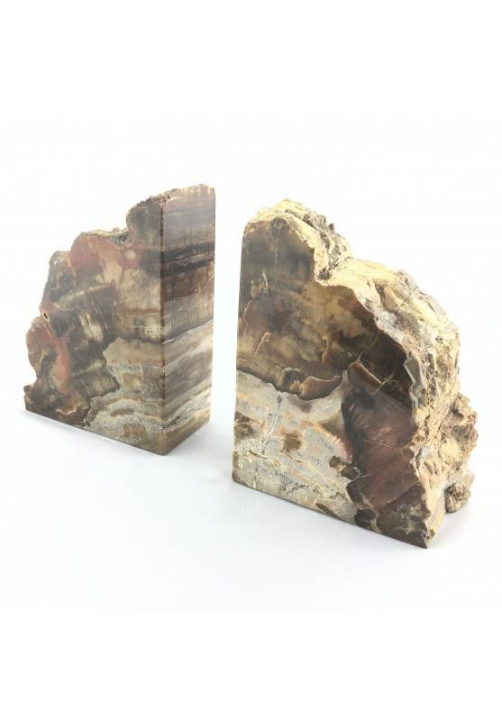 BIG Bookends Slice of  FOSSIL wood Silicified EXTRA Quality-1