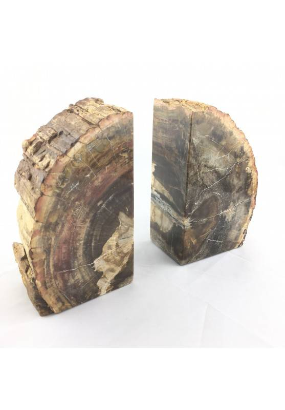 BIG Bookends Slice of  FOSSIL wood of Madagascar Silicified EXTRA Quality-1