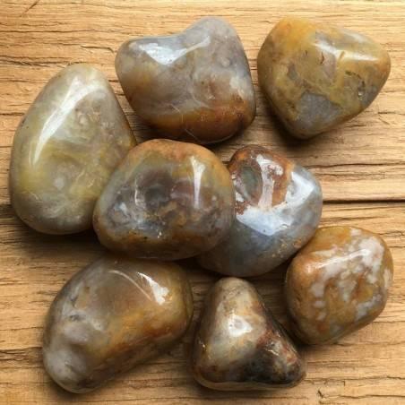 COPROLITE Dinosaur Fossilized Poo BIG Crystal Healing Quality Chakra A+-1