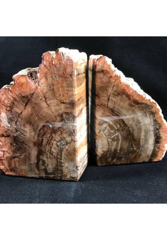 * Minerali * Raro FERMALIBRI in LEGNO FOSSILE Alta Qualità da Collezionismo A+-1