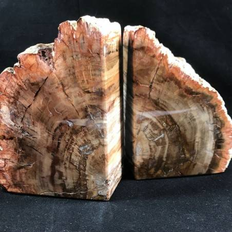 MINERALS * Rare Petrified WOOD Fossil Bookends Paperweight High Quality Specimen A+-1