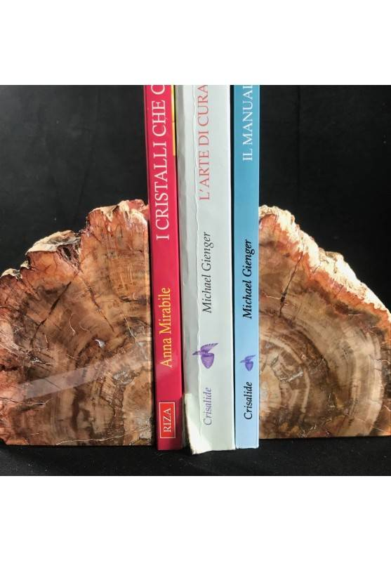 MINERALS * Rare Petrified WOOD Fossil Bookends Paperweight High Quality Specimen A+-2