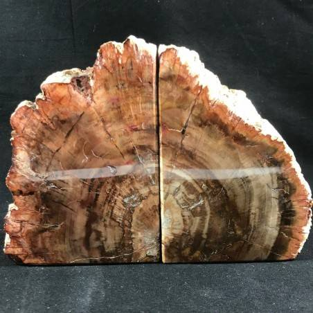 MINERALS * Rare Petrified WOOD Fossil Bookends Paperweight High Quality Specimen A+−3