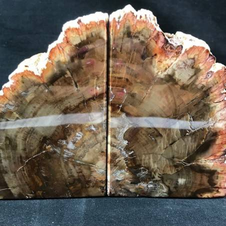 MINERALS * Rare Petrified WOOD Fossil Bookends Paperweight High Quality Specimen A+-4