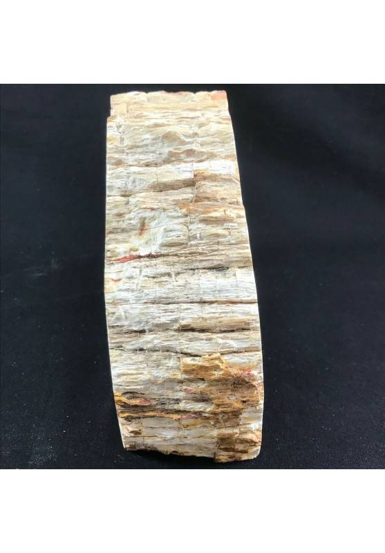 MINERALS * Rare Petrified WOOD Fossil Bookends Paperweight High Quality Specimen A+-6