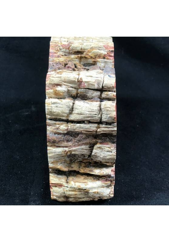 MINERALS * Rare Petrified WOOD Fossil Bookends Paperweight High Quality Specimen A+-7