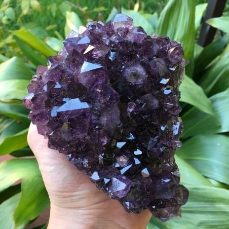 MINERALS * AMETHYST Druzy Cluster Crystal URUGUAY Very High Quality! Crystals−3